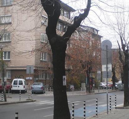 Улица  Оборище