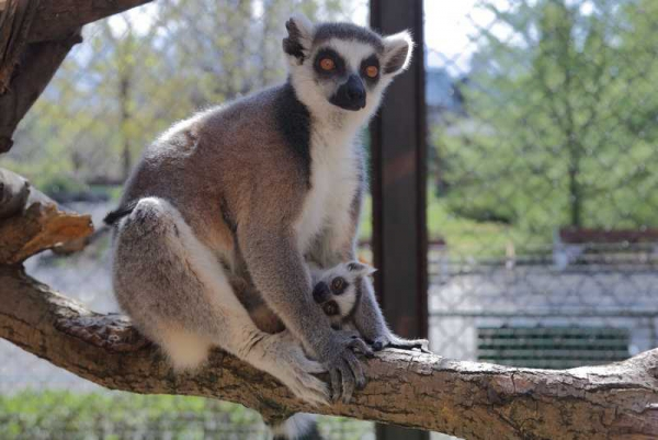 Record Number of Newly Born Animals in Sofia Zoo in 2018
